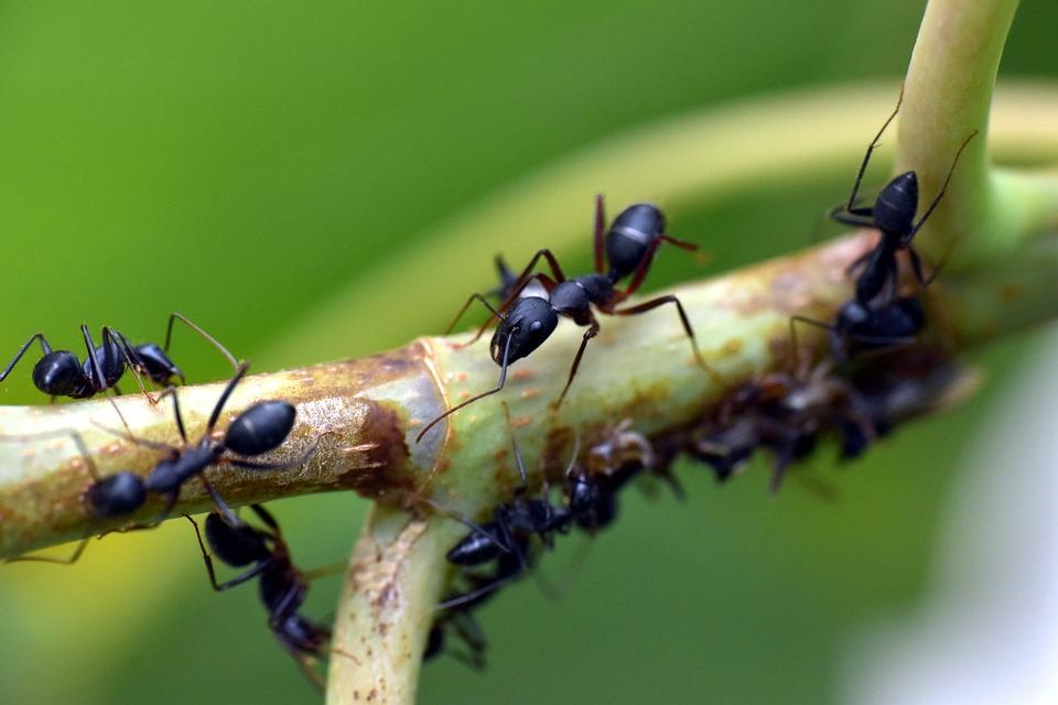 Traitement efficace contre les fourmis
